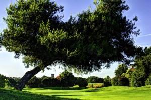 Marco_Simone_Golf_03.jpg